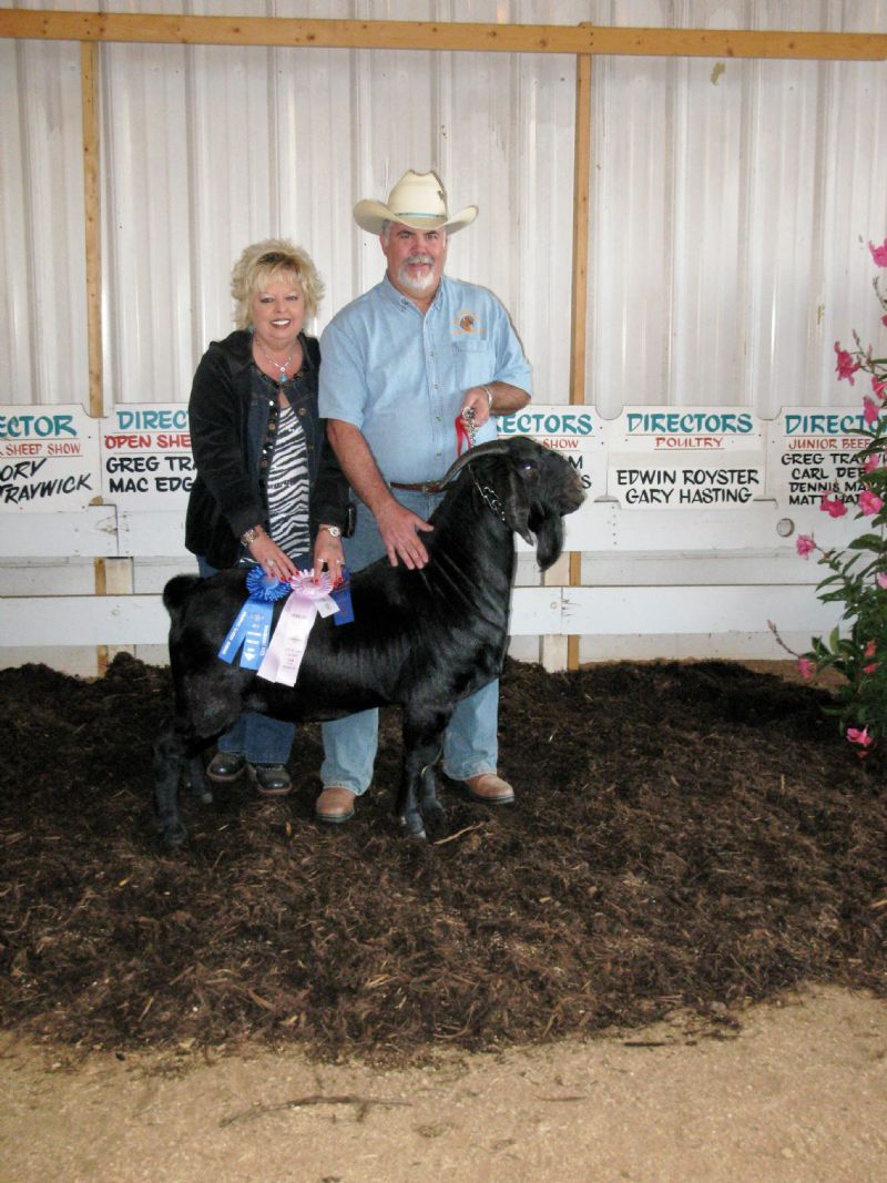 REDCREEK'S NIGHTSHIFT wins Junior Grand Champion Yearling buck competition,